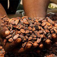 Lebkuchen-Schmidt und Fairtrade-Kakao